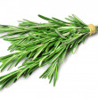 Twig of rosemary — Stock Photo