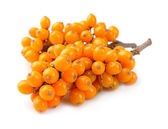 Sea buckthorn berries branch — ストック写真