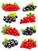 Set of currant — Stock Photo