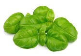 Fresh basil leaves — Stock Photo