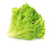 Lettuce salad isolated — Stock Photo