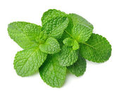 Fresh mint herbs — Stock Photo