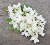 Flor de acacia — Foto de Stock