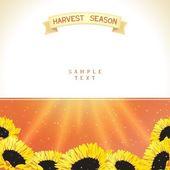 Harvest season with sunflowers — Stock Vector
