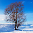 Winter lanscape with single tree  — Foto Stock