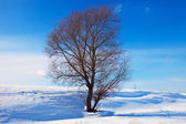 Winter lanscape with single tree — Stock Photo