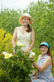 Happy women gardening with roses — Stock Photo
