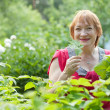 Woman gathers raspberry leaves — Stock Photo #13671459