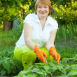 Woman working in field of beans — Stock Photo #13671544