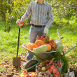Stock Photo: Mwith vegetables harvest