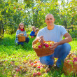 Happy family with apple harvest — Stock Photo