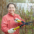 Gardener working in  garden - Stock Photo