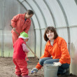 Stock Photo: Family works in hothouse