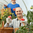 Royalty-Free Stock Photo: Woman and man picking tomato