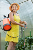 Gardener working with knapsack spray — Stock Photo
