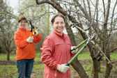 Two women trimming an apple tree — Stock Photo