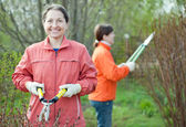 Gardeners working in spring garden — Stock Photo