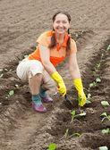 Donna matura piantare il cavolo — Foto Stock