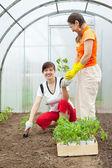 Giardinieri femminile piantare pomodori — Foto Stock