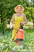 Woman spraying vegetables plant — Stock Photo
