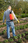 Man spraying strawberry plant — Stock Photo
