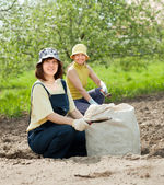 Gardeners fertilizes soil — Stock Photo