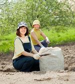 Gardeners fertilizes soil — Stock Photo