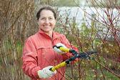 Gardener working in garden — Stock Photo