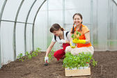 Women planting in greenhouse — Stock Photo