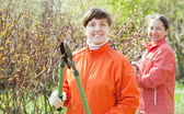 Women cutting shrubbery at garden — Stock Photo