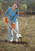 Mature gardener planting sprouts — Foto de Stock