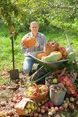 Man with vegetables harvest in garden — Stock Photo