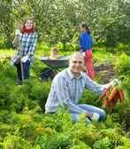 Happy family is picking carrots — Stock Photo