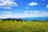 Mountains landscape with herd of horses — Stock Photo