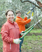 Women pruning apple tree in orchard — Stock Photo