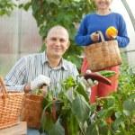 homem e mulher na planta vegetal — Foto Stock
