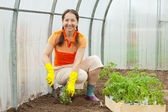Mature woman planting tomato — Stock Photo
