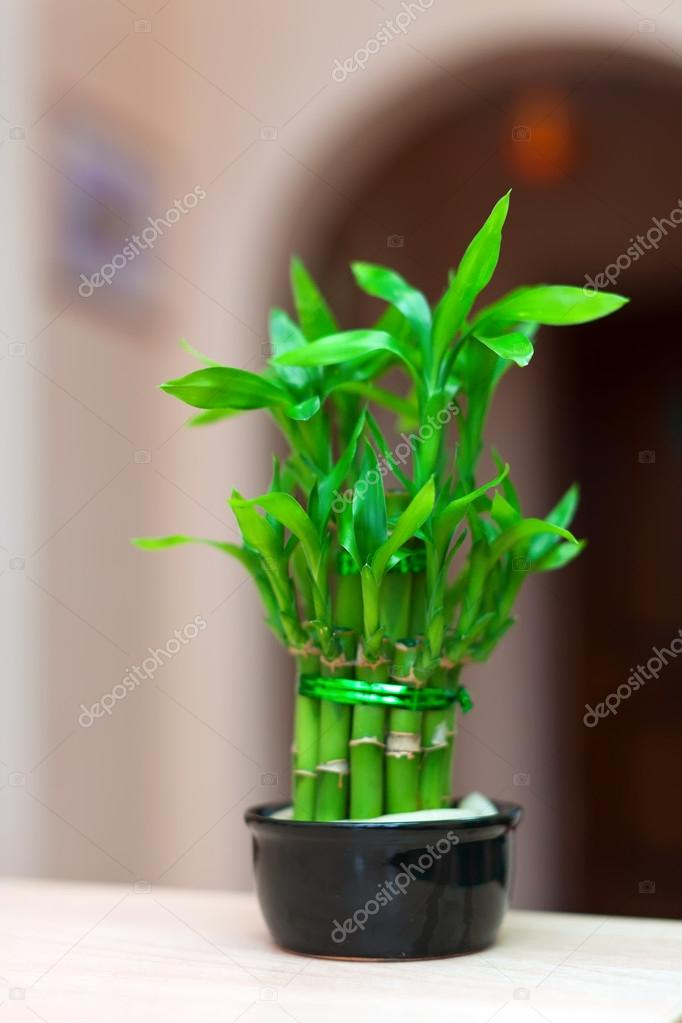 Gelukkige bamboe plant stockfoto jim filim 15273465 for Bamboe plant