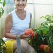 Stock Photo: Woman picking tomato