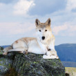 White wolf in wildness area — Stock Photo #18198917