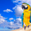 Macaw  against sky — Stock Photo