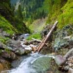 Mountains stream — Stock Photo #18199309