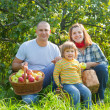 Stock Photo: Happy family gathers apples in garden