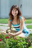 Gardener in roses plant — Stock Photo