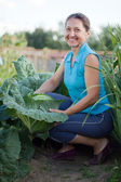 Woman in plant of cabbage — Stockfoto