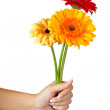 Three daisy flowers in hand. Isolated over white — Stock Photo #18200901