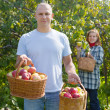 Royalty-Free Stock Photo: couple picking apples