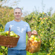 Stock Photo: Mwith basket of harvested apples