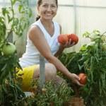 Mature woman picking tomatoes — Stock Photo