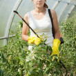 Female gardener working in greenhouse — Stock Photo #18202193